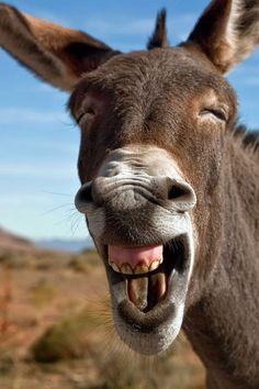 "Donkey:  ""Shrek!  You sure need 'Tic-Tacs' or something!"""