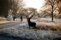 Richmond Park with deer, this goes back over a 1000 years