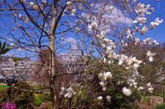 Iverina: Algo más que un jardin en Copenhague