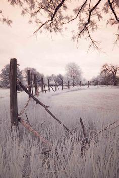 Fine Art Photography - Farm Fence Infrared  - 11 x 16.5 photograph via Etsy