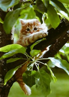 Image result for photo, cat on a limb