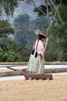 Market Lane Coffee - Nolberto Mamani Bolivia - Caranavi Region