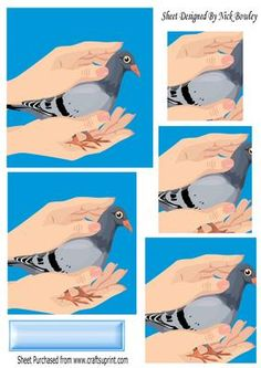 A lovely pigeon cupped in a pair of hands pyramids on Craftsuprint - Add To Basket!