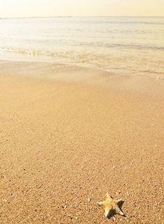 ginger beach inn