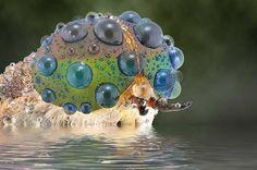 Estos impresionantes acercamientos revelan la elegancia de los insectos en 15 imágenes