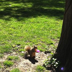 Squirrel finds Easter Egg the day before...