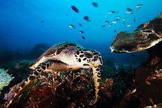 Komodo Island in Pulau Komodo, Nusa Tenggara Timur