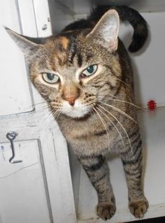 12 / 24        Petango.com – Meet Molly, a 1 year Domestic Shorthair / Mix available for adoption in HOLLISTER, MO Contact Information Address  255 Critter Trail , Unit, HOLLISTER, MO, 65672  Phone  (417) 332-0172  Website  http://www.taneycohealth.org  Email  simpss2@lpha.mopublic.org