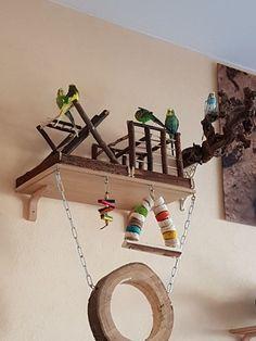 New pet bird budgies animals Ideas Diy Parrot Toys, Diy Bird Toys, Budgie Toys, Parakeet Toys, Parakeet Cage, Cockatiel Cage, Bird Play Gym, Homemade Bird Toys, Diy Bird Cage