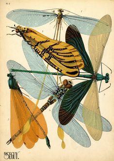 Dragonflies by E.A. (Emile-Alain) Séguy (1889–1985). 1. Nemopistha imperatrix. Afrique Oc.; 2. Tomatares citrinus. Afrique Austral.; 3. Neurolasis chinesis. Asie; 4. Aeschna Cyanéa. Europe; 5. Mnais earnshawi. Indochine. 1920s (ca.1928) insect pochoir (stencil) prints by E.A. (Emile-Alain) Séguy (1889–1985). Paris: Éditions Ducharte et Van Buggenhoudt
