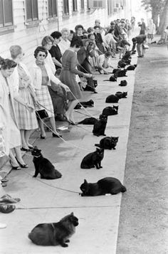 You really think that YOUR cat is more talented than MY Whiskers????  Black Cat Auditions - Hollywood, 1961
