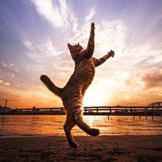 Lindas fotos de gatos por Seiji Mamiya