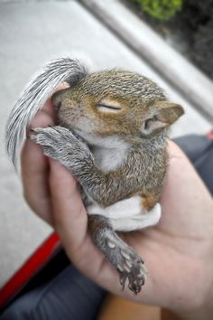 baby squirrel. So So cute. Please check out my website thanks. www.photopix.co.nz
