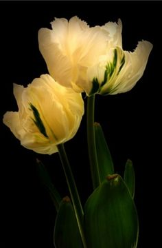 Therefore, treat your words as the mighty instruments they are - to heal, to bring into being, to remove, as if by magic, the terrible violations of childhood, to nurture, to cherish, to bless, to forgive - to create from the whole cloth of your soul, true love.,,,,,,,,,,,,,   tulips