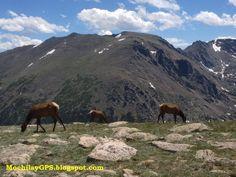 El Rocky Mountain National Park  es un parque situado en el estado de Colorado. Abarca una pequeña sección de la cordillera de la que recib...
