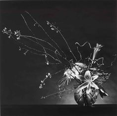 Artwork by Robert Mapplethorpe, Flower Arrangement, Made of gelatin silver print, flush–mounted on card