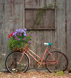 .old bike with planter box.