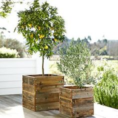 Cool Gifts for Couples - Meyer lemon tree that can be grown inside or outside! Cool Gifts for Couples - Meyer lemon tree that can be grown inside or outside! Wooden Garden Planters, Rustic Planters, Wood Planter Box, Outdoor Planters, Pallet Planters, Garden Pallet, Pallet Fence, Outdoor Fire, Planter Ideas