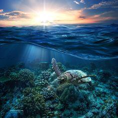 The Ocean Is The Life by Vitaliy Sokol