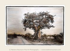 """ Roadside Baobab"" - Timeless black and white Fine Art Photography by Master Fine Art Photographer Marlene Neumann. Decor. Gifts. Art for your home and office. www.marleneneumann.com"