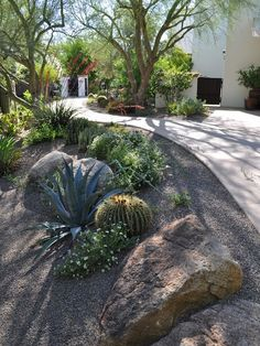 garden path - dry garden - cacti and succulents