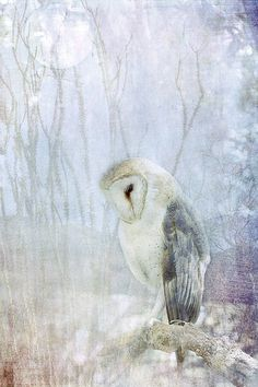 It represents texture because it appears like you can actually feel the soft, silky owl. One could also simulate the feel of the rough branch the owl is perched on. Art And Illustration, Watercolor Bird, Watercolor Paintings, Paintings Of Owls, Owl Photos, Mundo Animal, Bird Art, Amazing Art, Amazing Things