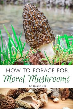Foraging for morels can be a fun activity for the whole family. Learn how to identify them, where to hunt for them, and what to avoid when looking. Growing Mushrooms, Wild Mushrooms, Stuffed Mushrooms, Easy Hobbies, Edible Mushrooms, Mushroom Hunting, Living Off The Land, Wild Edibles, Edible Plants