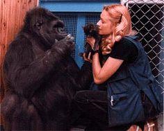 LOVE Koko the gorrilla :)