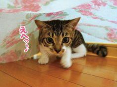 猫ゴハンの時間に遅刻したので・・・|うにオフィシャルブログ「うにの秘密基地」Powered by Ameba