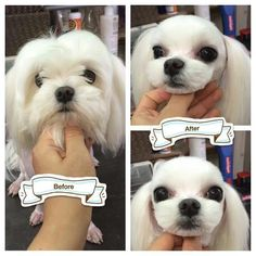 Perfect example of taking the natural cuteness of the breed and making it look like some stupid Japanese cartoon character.