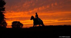 Equestrian Themed Trash The Dress at sunset time on the ASC Greenway © Fort Mill Photography Fort Mill, Bridal Portraits, Equestrian, Sunset, Photos, Photography, Dresses, Pictures, Vestidos