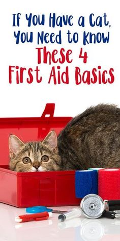 If You Have a Cat, You Need to Know These 4 First Aid Basics. After all, accidents happen.