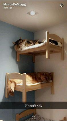 323 Best Cats Bed Images Cats Cat Room Cat Furniture