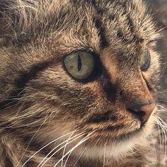 i.spy.cat.eye...