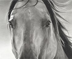 """Eye to Eye by Mary Ross Buchholz Graphite & Charcoal ~ 9"""" x 11"""""""