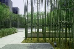 Mikyoung Kim has created some very intriguing and beautiful environments. These art pieces are not your mom's traditional garden. Bamboo Landscape, Modern Landscape Design, Landscape Architecture Design, Garden Landscape Design, Modern Landscaping, Contemporary Landscape, Landscape Lighting, Front Yard Landscaping, Landscaping Design