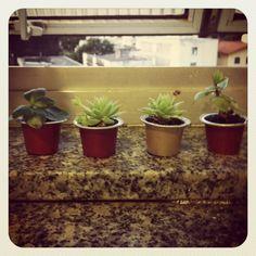 My little Nespresso capsules garden !