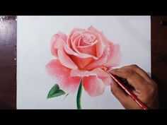 Drawing a Rose - Flower drawing series 1 - Prismacolor pencils - YouTube