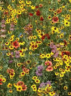 Eastern United States and southeast Canada Pollinator Mixture