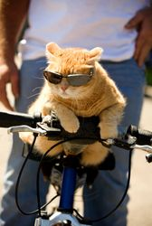 """Cool rock & roll kitty / """" Man, This is MY Bike (im a cool biker, so you know)... don't dare touch it, OK?! """""""