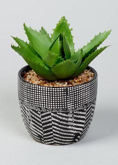Aloe in Patterned Pot (12cm x 10cm)