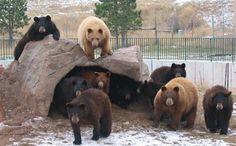 Bear Country USA - South Dakota Tourism
