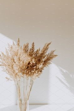 Beach Discover Reeds in vase by Floral Deco on Cream Aesthetic, Brown Aesthetic, Flower Aesthetic, Aesthetic Grunge, Aesthetic Pastel Wallpaper, Aesthetic Backgrounds, Aesthetic Wallpapers, Aesthetic Pictures, Dried Flowers