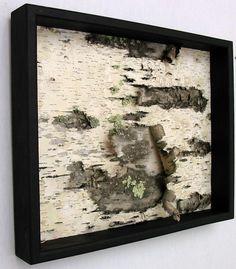 Framed Birch Bark- I love birch!  Algonquin Park...