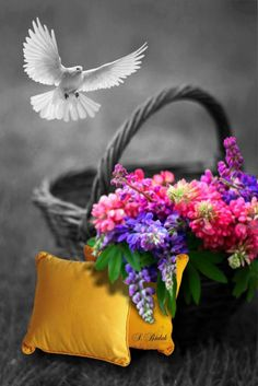 what a lovely place to land Splash Photography, Cute Photography, Contrast Photography, Black And White Background, Black And White Colour, Color Splash, Color Pop, Photo Splash, Beautiful Flowers