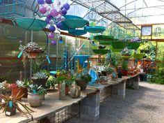 Plant Talk: DIG Nursery