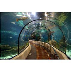 Aquarium -- Atlanta,Georgia