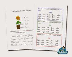 La Eduteca: RECURSOS PRIMARIA | Unidad didáctica adaptada de las plantas
