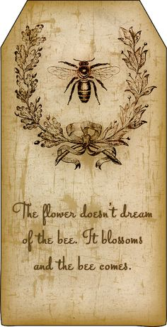 Bountiful Heirlooms: Free Printables: Bee and Beekeeping Tags aged paper / vintage style Éphémères Vintage, Vintage Style, Bee Art, Bee Happy, Save The Bees, Bees Knees, Queen Bees, Bee Keeping, Pyrography