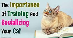 Kindergarten for kitten is a wonderful way to socialize and train very young cats from 8 to 15 weeks of age. http://healthypets.mercola.com/sites/healthypets/archive/2016/01/02/kitten-kindergarten.aspx